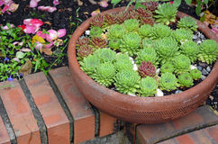 Cactus planter Royalty Free Stock Images