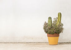 Cactus planter horizontal Stock Photography