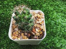 Cactus in planter Stock Photos