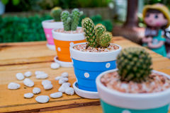 Cactus. Planting trees for Earth Day and  Arbor Day Royalty Free Stock Images