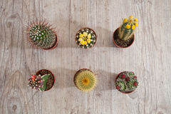 Cactus plants. Set of small exotic cactus plants for home decoration Royalty Free Stock Images