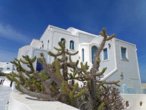 Cactus plants against white Greek Islands style architecture under blue sky, Santorini Island Royalty Free Stock Photography
