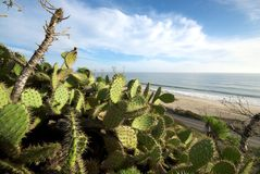 Cactus plants along California Beach. Green cactus plants sit in the foreground against the backdrop of a beautiful california beach Stock Photos