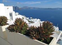 Cactus plants along the path over the caldera of Santorini Island Royalty Free Stock Photography
