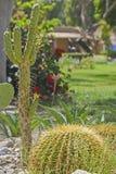 Cactus plants in an arid desert garden. Cactus plants echinocactus in an ornamental arid desert garden Royalty Free Stock Image