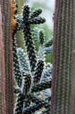 Cactus plants in botanical garden Stock Photography