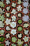 Cactus plants come in a number of varieties and shapes. royalty free stock photo