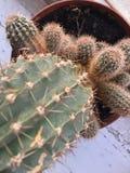 Cactus. Plants, love, cactus, tumblr, green Stock Image