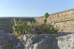 Cactus plants over rocks, ancient fortress wall behind. Stock Photo