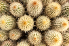 Cactus. Plants. Particular view of the nursery Royalty Free Stock Photos
