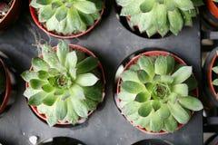 Cactus plants Royalty Free Stock Photos