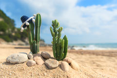 Cactus plants with sombrero at the beach. Cactus plants with Spanish Sombrero at the beach Royalty Free Stock Photos
