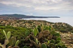 Cactus plants at west coast of San Pietro island, Sardinia Stock Photography