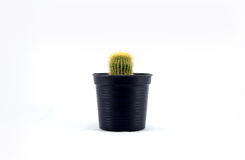 Cactus in plastic pot Stock Afbeelding