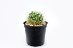 Cactus in plastic pot Royalty-vrije Stock Foto