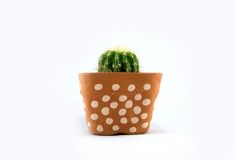 Cactus in plastic pot Royalty-vrije Stock Afbeeldingen