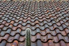 Cactus por el tejado de teja Imágenes de archivo libres de regalías