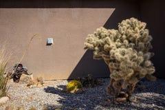 Cactus por una casa imagenes de archivo