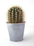 Cactus in a pot. On a white background Stock Photos