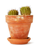 Cactus in a pot. A small cactus with in a small clay pot; usually found in deserts as their native grounds Stock Photo