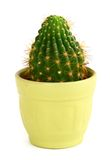 Cactus in pot Stock Photography