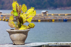 Cactus in pot at background Royalty Free Stock Photos