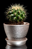 Cactus in a pot  on black Royalty Free Stock Images