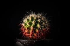 Cactus in a pot on a black background closeup. 2018 stock photos