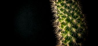 Cactus in a pot on a black background closeup. 2018 stock image