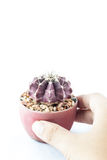 Cactus in pot with hand holding Royalty Free Stock Photography