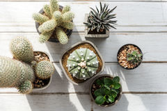 Cactus Pot Home Plants Concept. Cactus Plant Home Pot Concept stock photo