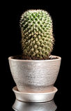 Cactus in a pot isolated on black Stock Photography