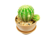 Cactus pot Royalty Free Stock Photography