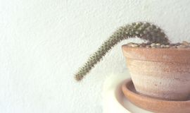 Cactus in a pot that is lonely on white background. stock photo