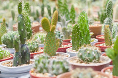 Cactus in pot Royalty Free Stock Photography