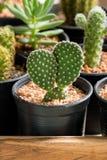 Cactus in pot op houten doos Stock Foto