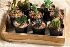 Cactus in pot op houten doos Stock Afbeelding
