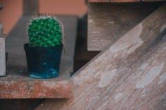 Cactus in pot op oude houten raad Stock Afbeeldingen