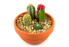 Cactus Pot Plants. An earthenware pot of cactus plants for the home royalty free stock image