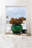 Cactus pot Royalty Free Stock Photos