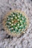 Cactus pot Stock Photos
