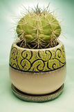 Cactus in pot. Cactus in a pot, succulent with Stand Royalty Free Stock Photography