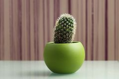 Cactus in a Pot. A thorny cactus plant in a green pot with a stripes background stock photos