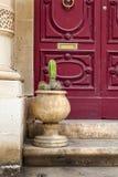 Cactus pot. Typical limestone entrance in Malta Stock Photos