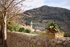 Cactus in a pot on a wall, church, trees and hill in background in Valldemossa, mallorca, spain stock image