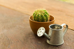 Cactus pot and Watering can model Royalty Free Stock Image