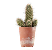 Cactus. Stock Photos
