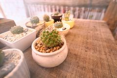 Cactus in the pot with white rock. Cactus in the mini pot and light effect royalty free stock photos