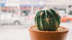 Cactus pot by window. Royalty Free Stock Photography