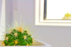 Cactus in a pot on the windowsill stock image